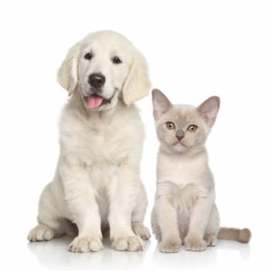 Dogs and cats generate allergens
